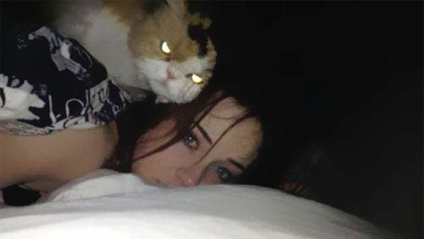 gatos con planes maquiavelicos 9