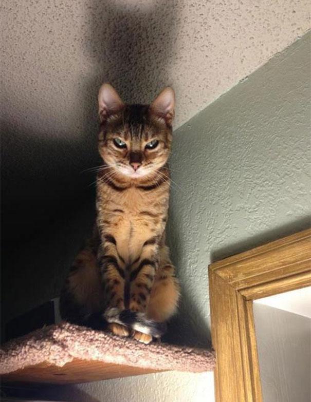 gatos con planes maquiavelicos