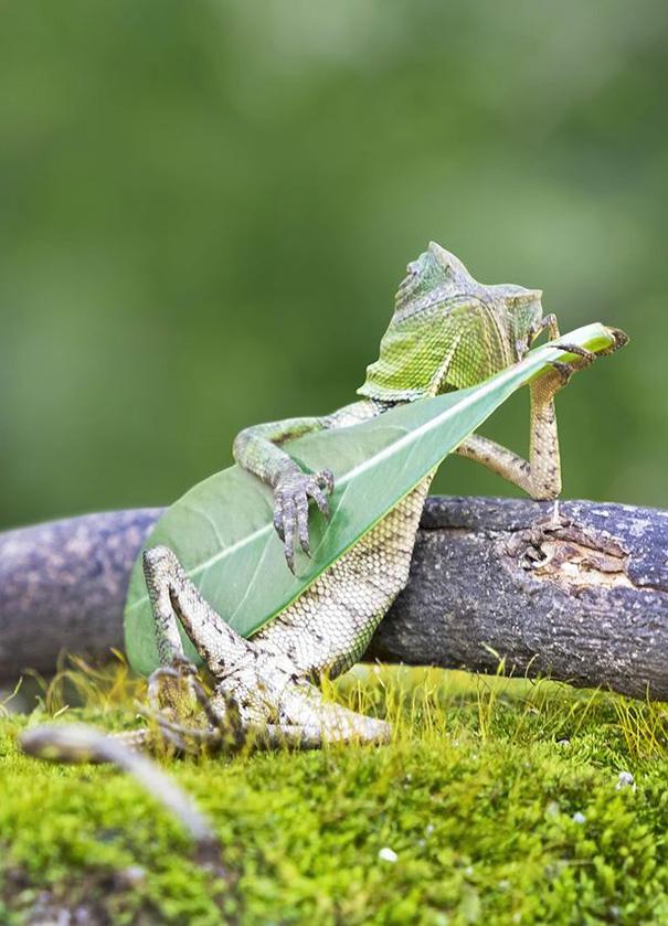 lagarto tocando la guitarra