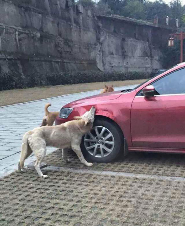 perros con sed de venganza 2