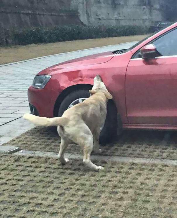 perros con sed de venganza 4