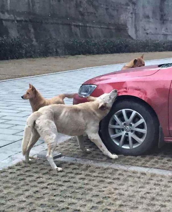 perros con sed de venganza
