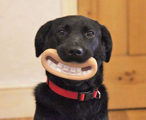 perros graciosos 2