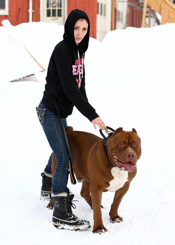pitbull 80 kilos 10