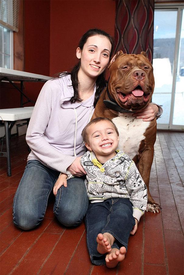 pitbull 80 kilos 14