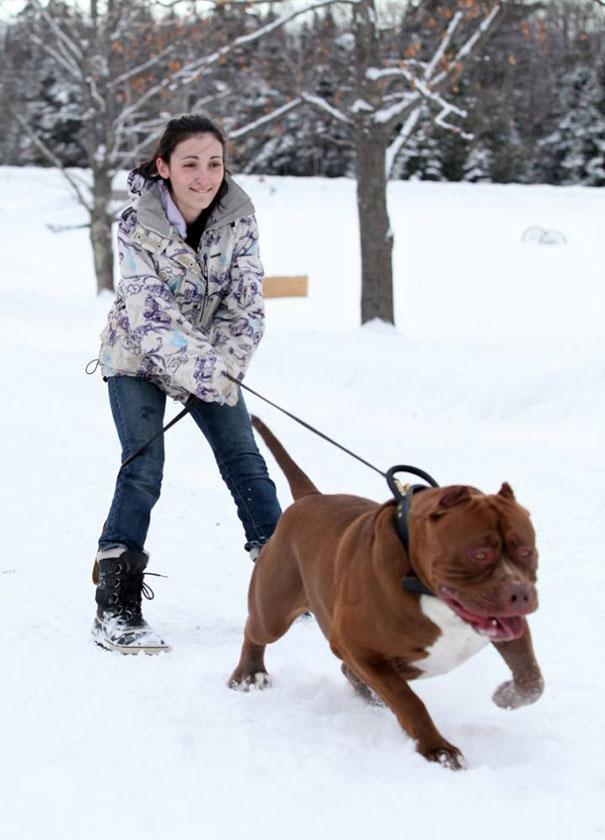 pitbull 80 kilos 9