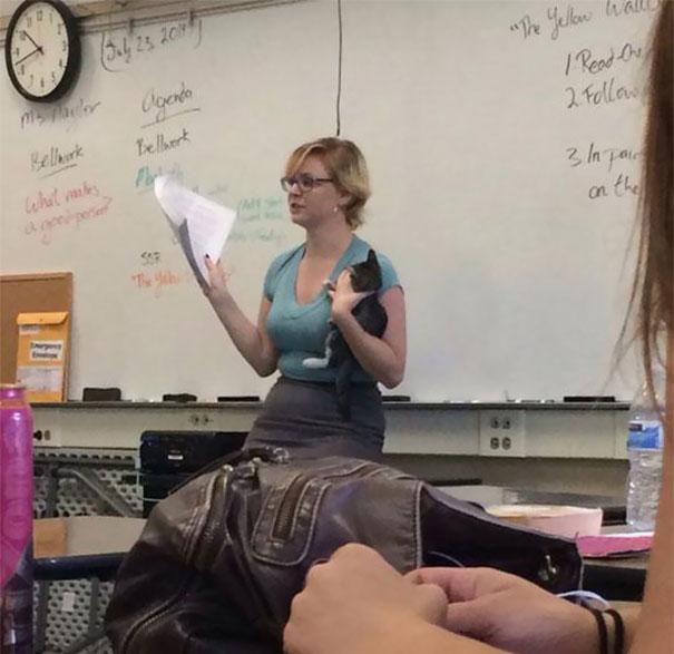 profesores especiales 3