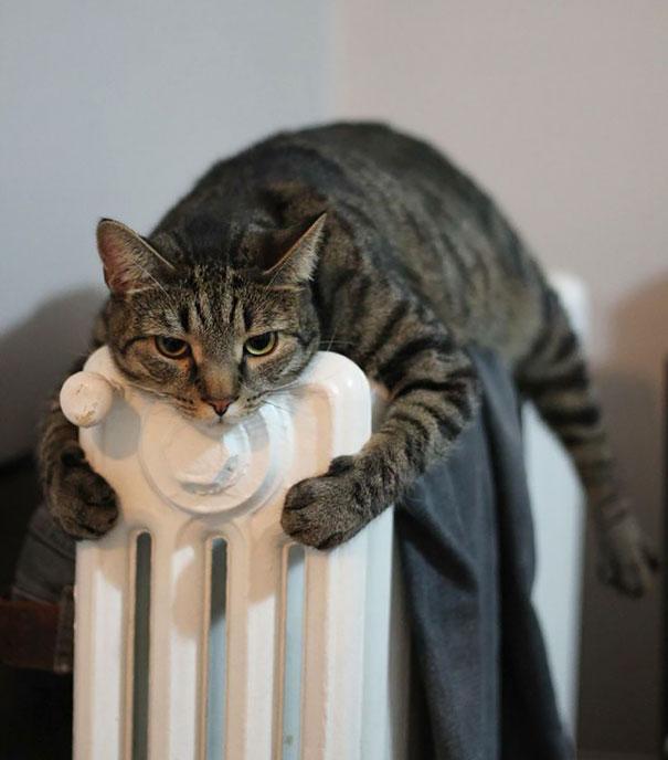 animales caloret 11