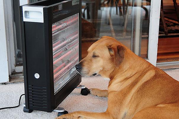 animales caloret 13