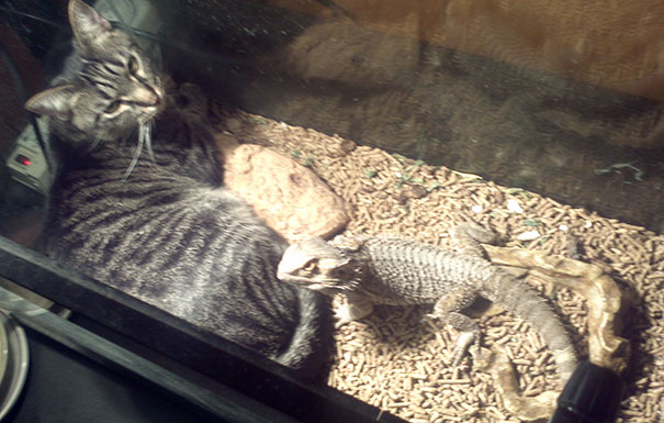 animales caloret 19