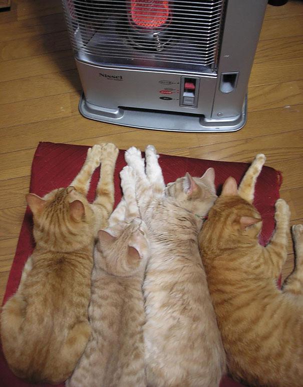 animales caloret