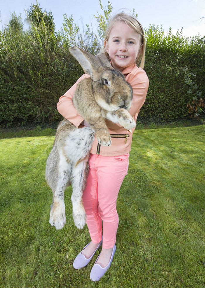 conejo enorme 2