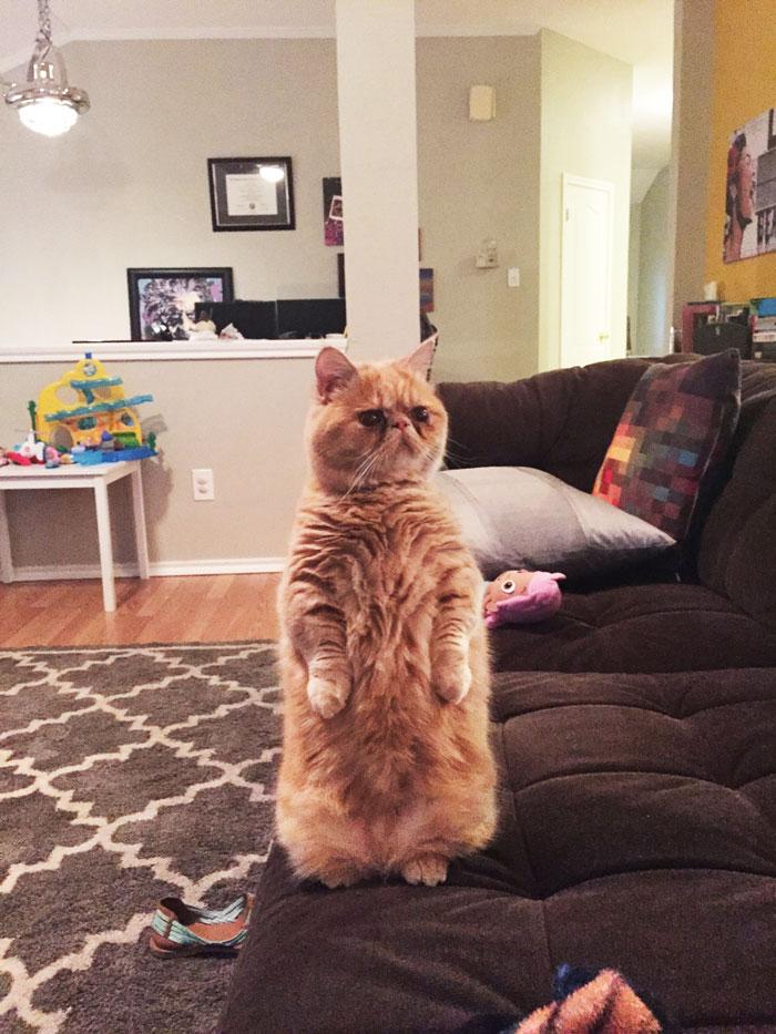 gato George 2