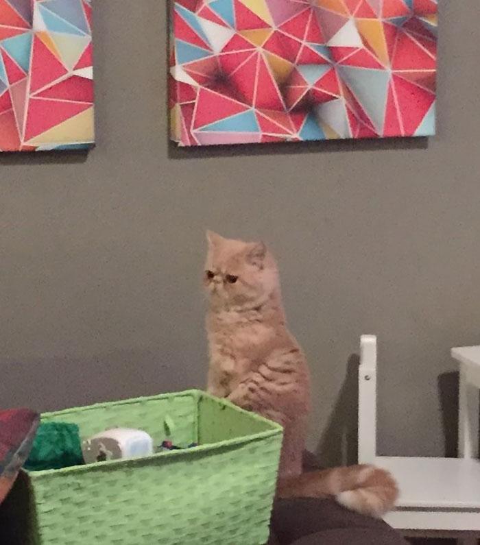 gato George 3