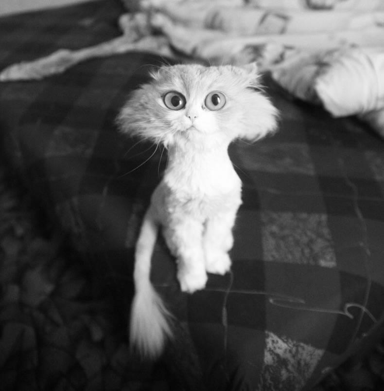 gato raro y gracioso