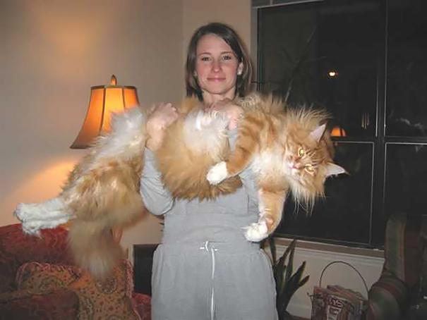 gatos que no pasan hambre 14