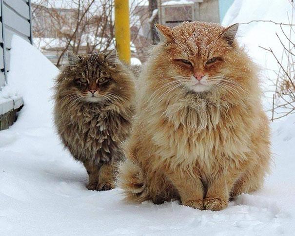 gatos que no pasan hambre 6
