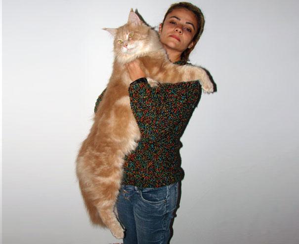 gatos que no pasan hambre 9
