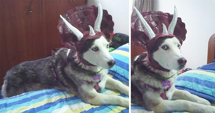 perro Triceratops 3
