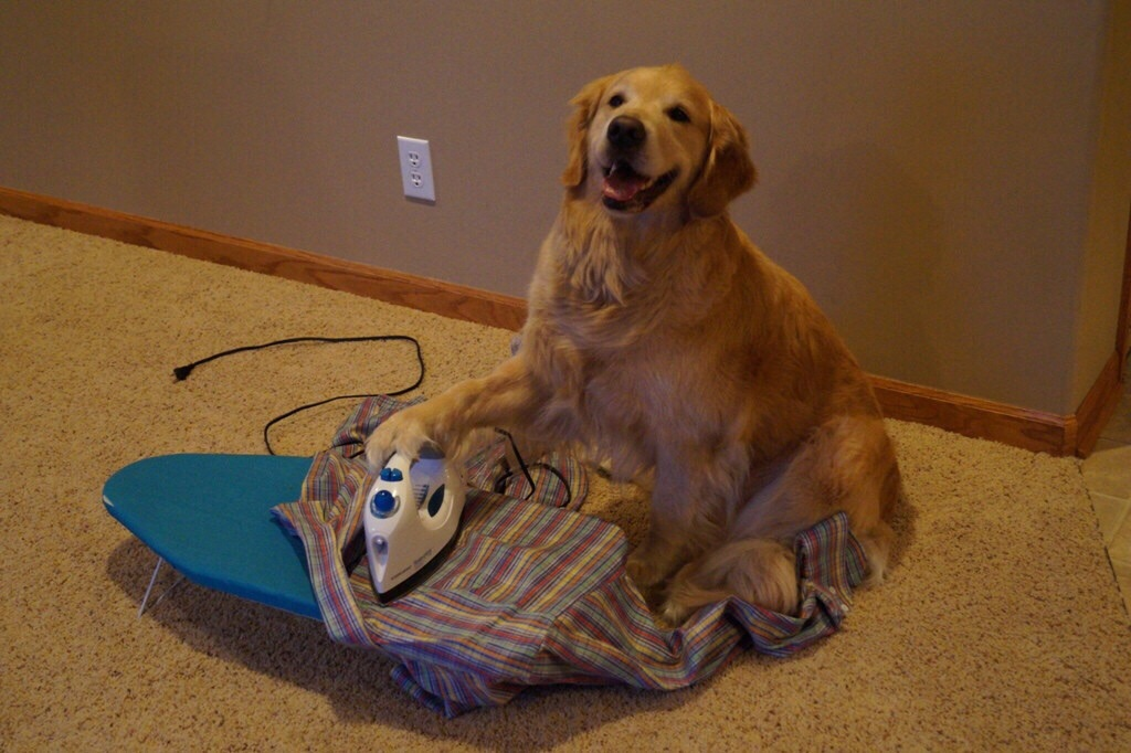 perro planchando