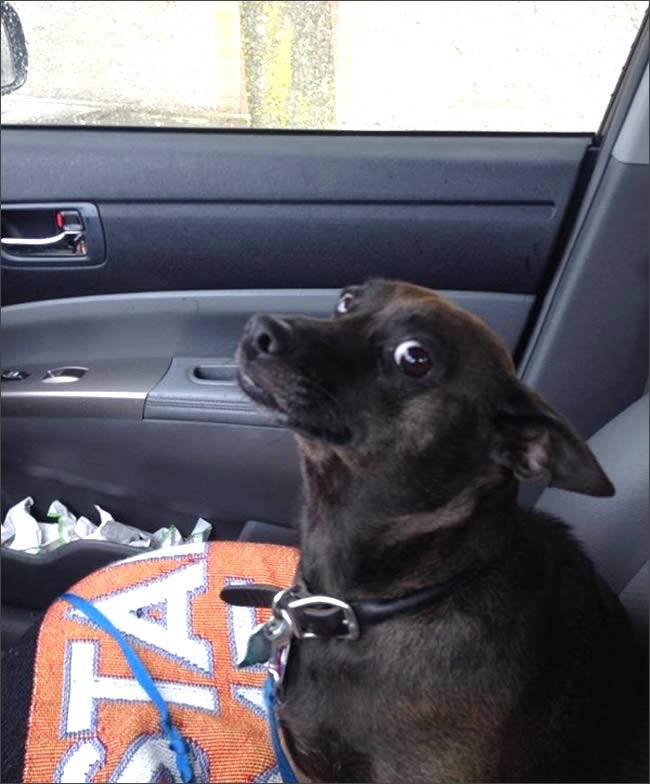 perros con miradas expresivas 10