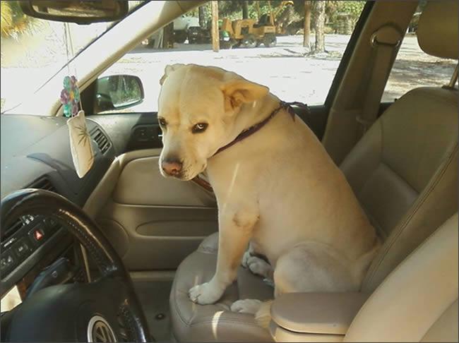 perros con miradas expresivas 3