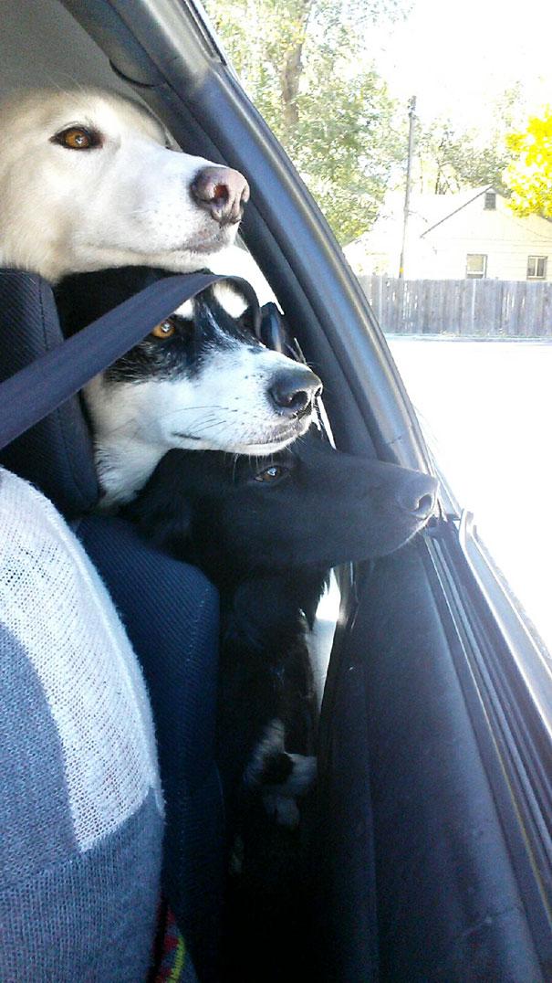 perros inseparables 14