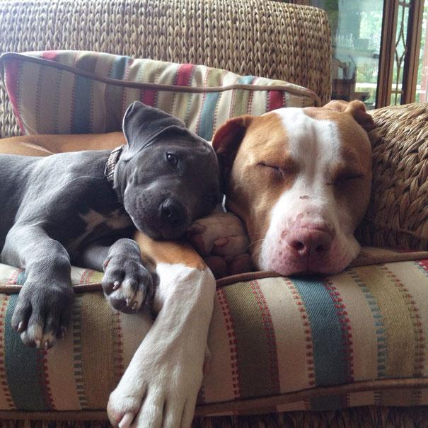 perros inseparables 16