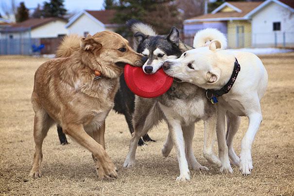perros inseparables 17