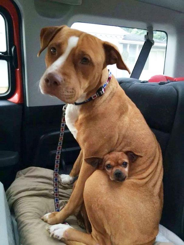 perros inseparables 4