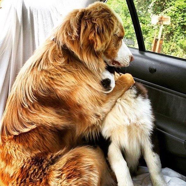 perros inseparables 5