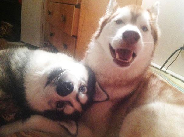 perros inseparables 8