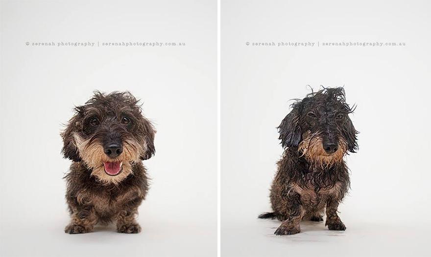 perros secos y mojados 2