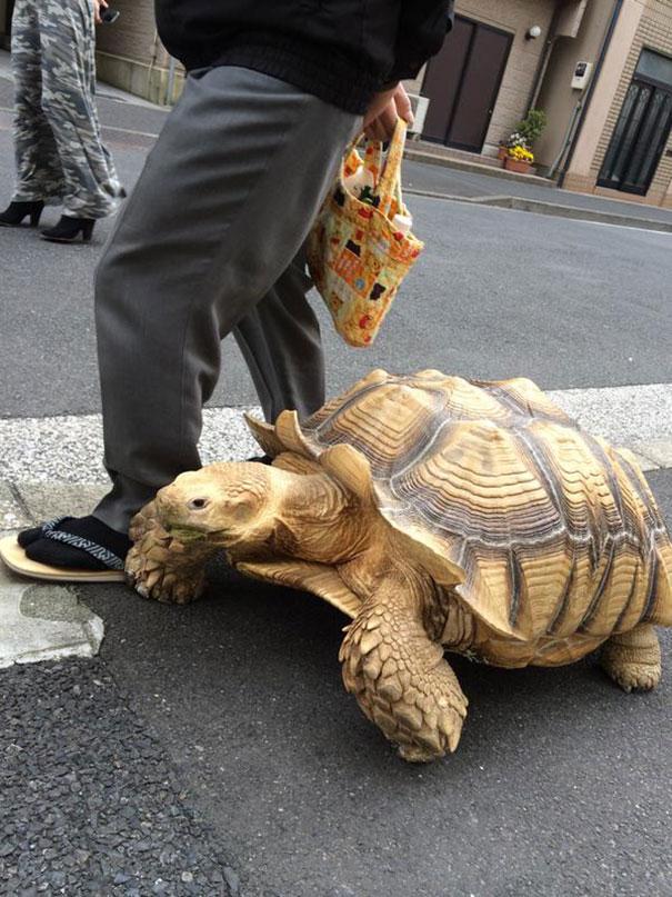 tortuga de paseo 2