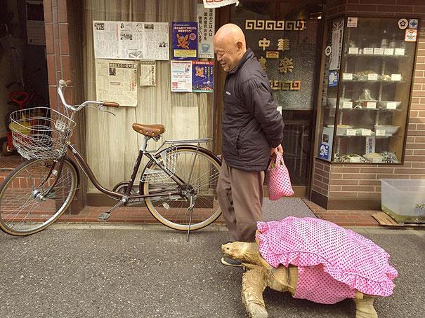 tortuga de paseo 3