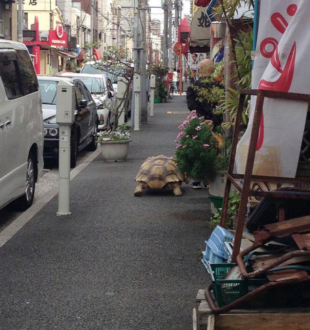 tortuga de paseo 4