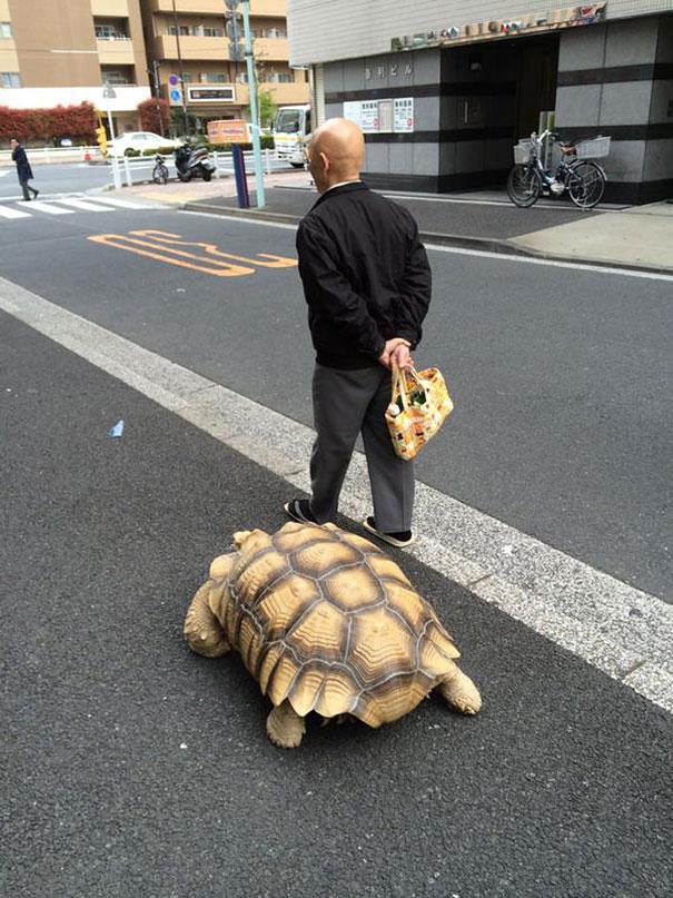 tortuga de paseo