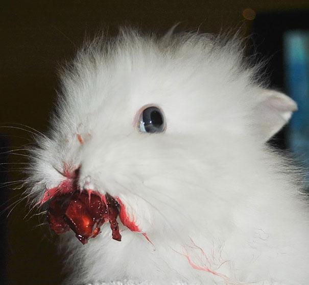 animales comiendo frutos rojos 3