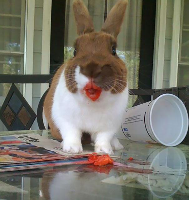 animales comiendo frutos rojos 4