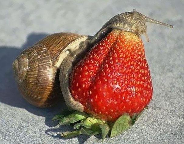 animales comiendo frutos rojos 5