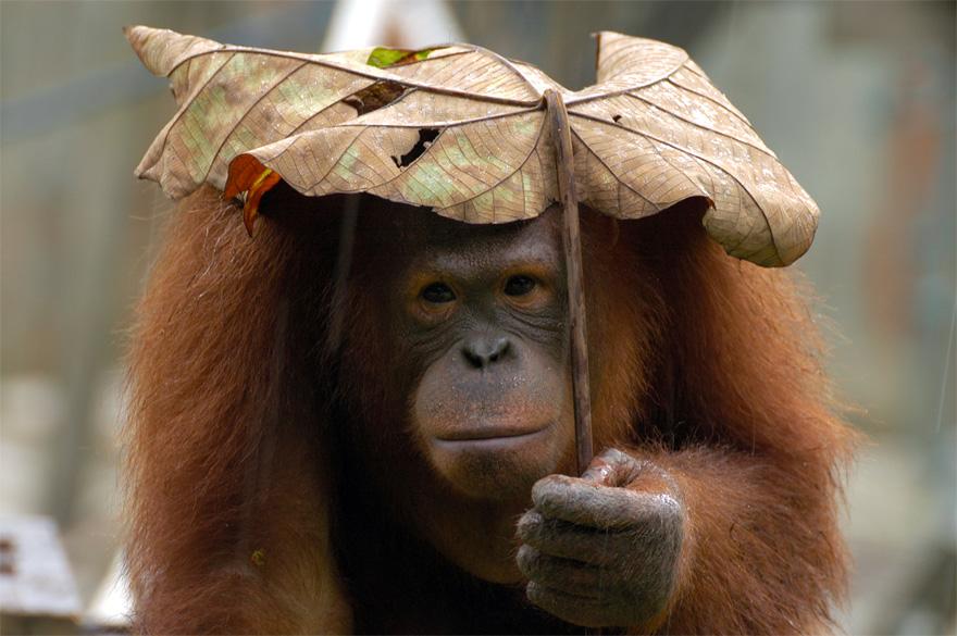 animales paraguas 10