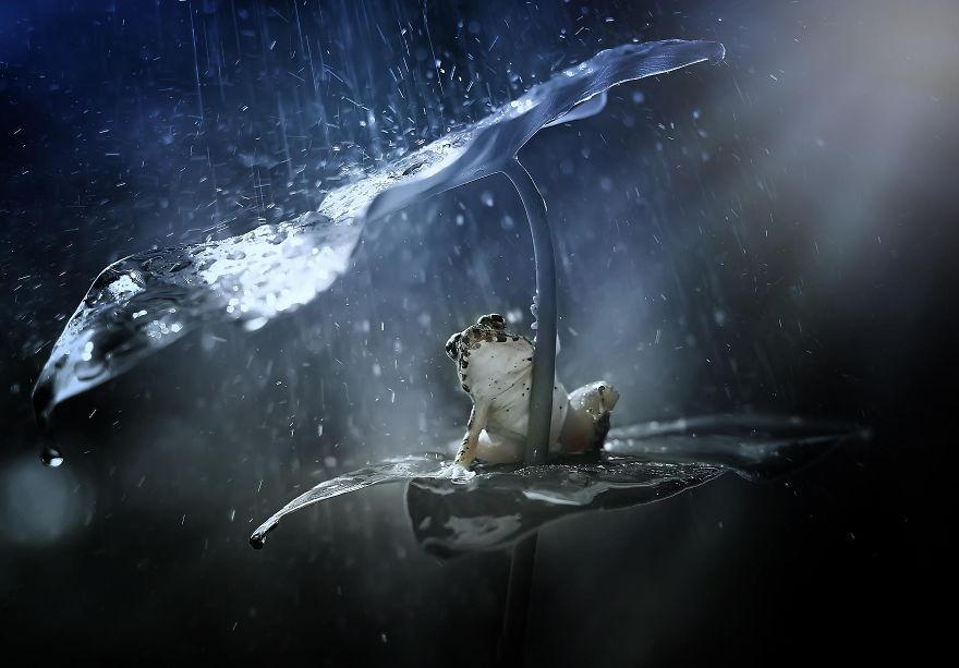 animales paraguas 13