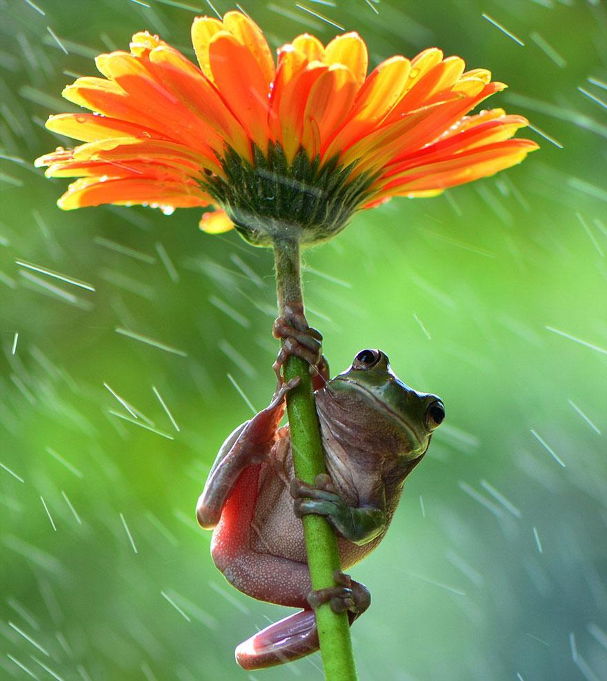 animales paraguas 4