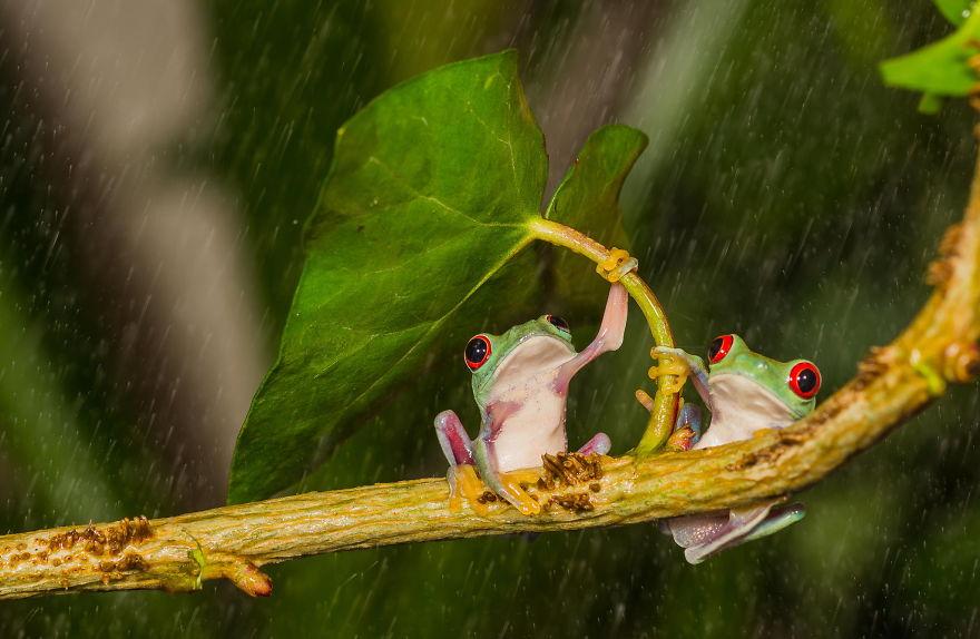 animales paraguas 7