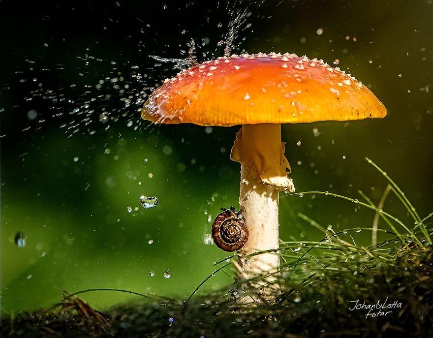 animales paraguas 9