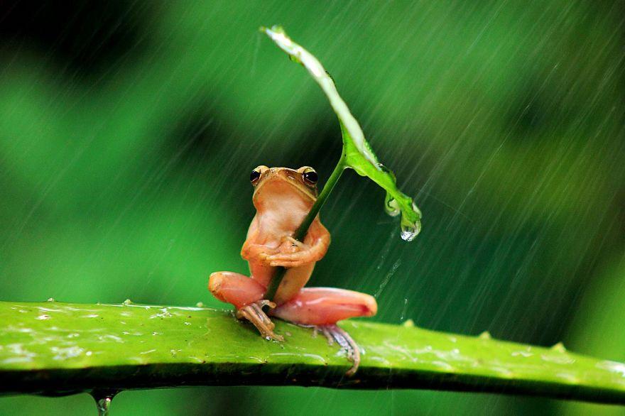 animales paraguas