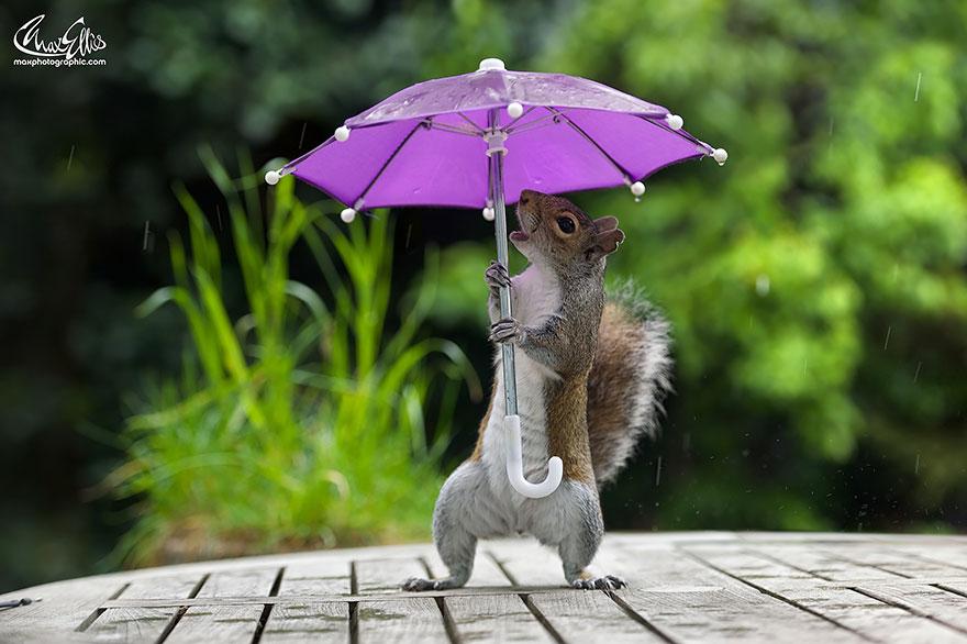 ardilla con un paraguas 2