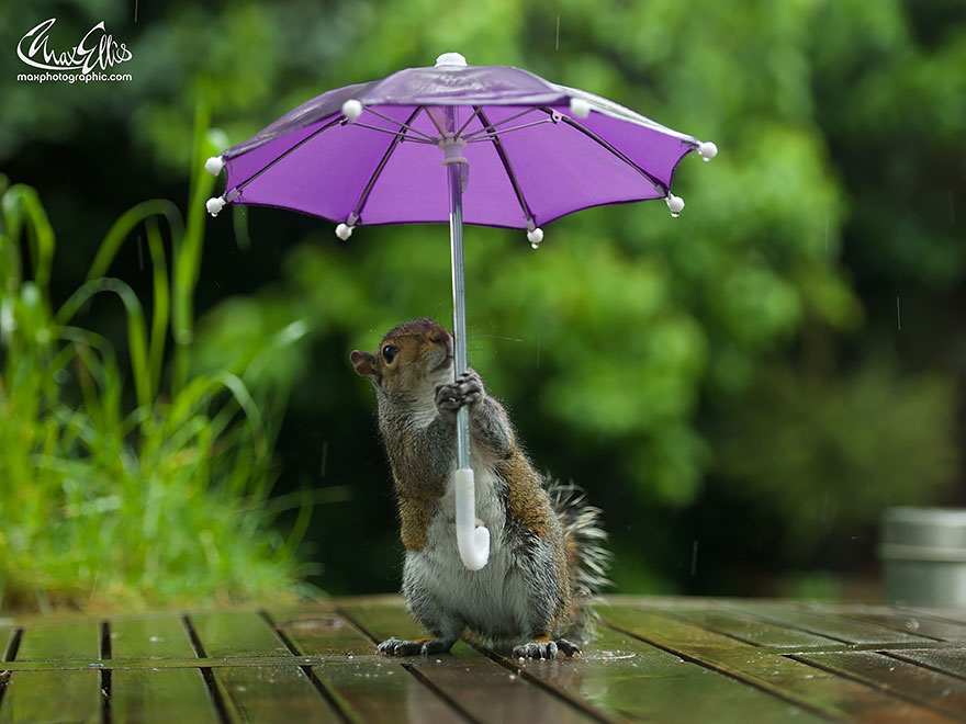 ardilla con un paraguas 4