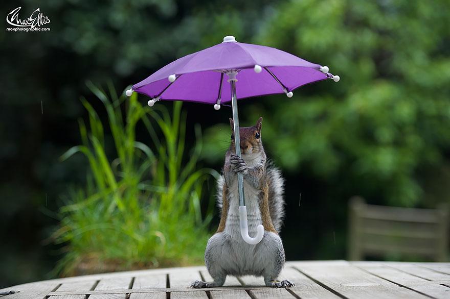 ardilla-con-un-paraguas-5.jpg