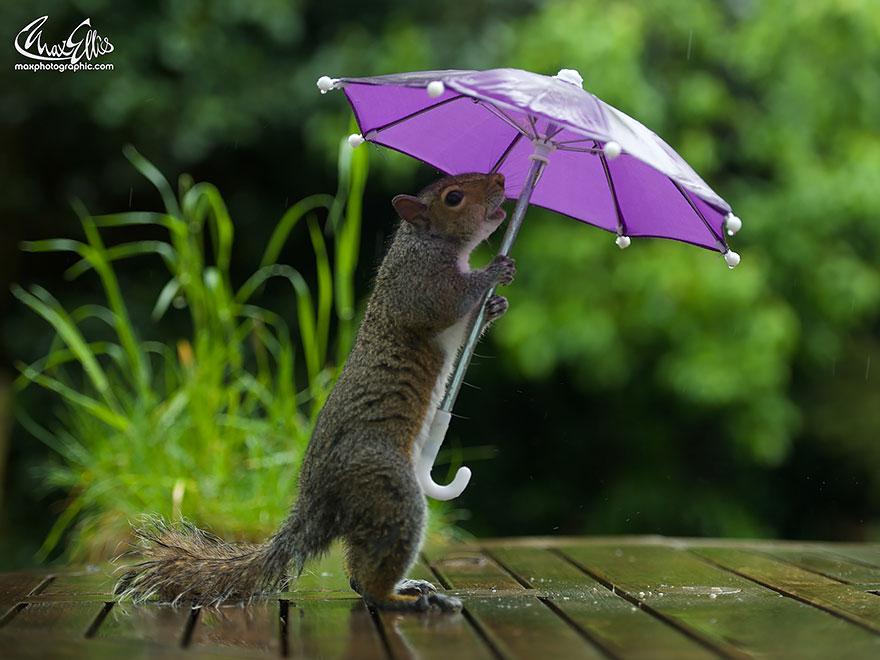 ardilla con un paraguas